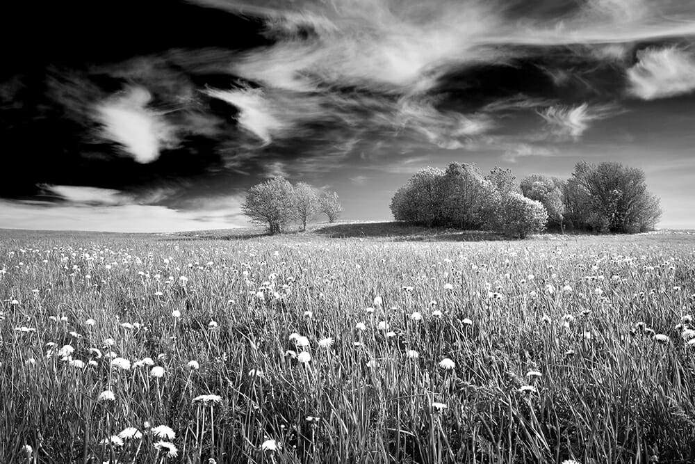 green field blue sky yellow daisies green trees black and white yellow filter dark sky black white cloud