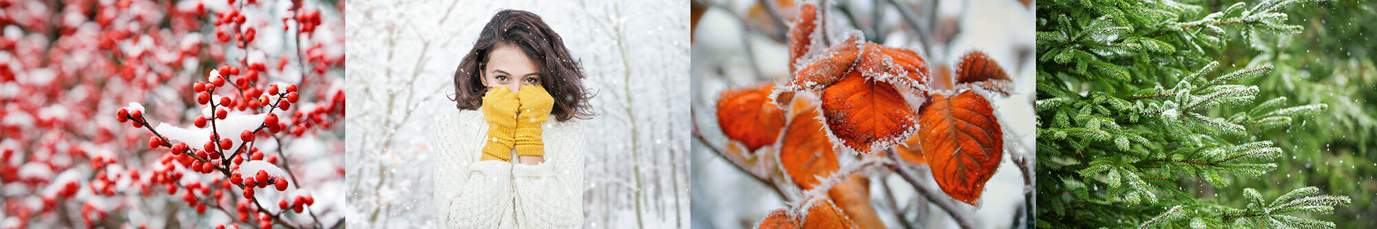 winter berries evergreen orange leaves yellow gloves cold frost snow