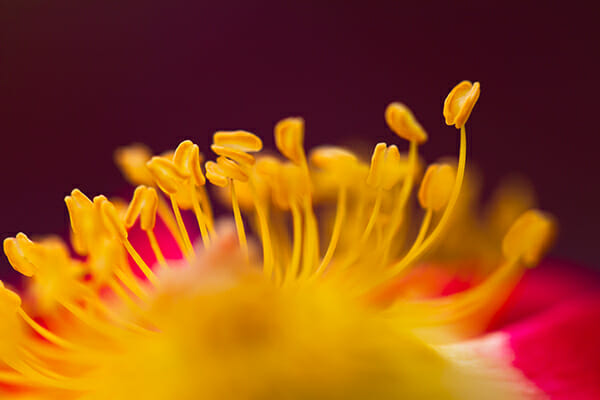 Copyright Jaymes Dempsey  flower photography