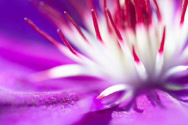 Copyright Jaymes Dempsey macro photography